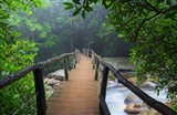 Wooden Bridge In Fog