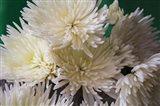 Tiny Petals II