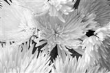 Blooming White BW