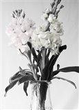 Pink & White Stock2 BW