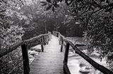 Wooden Bridge In Fog BW