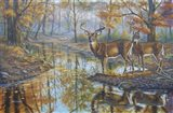 Brookside Retreat - Whitetails