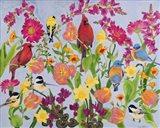 Songbird Collection