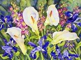 Callas with Irises