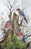 A Bluebird Morning