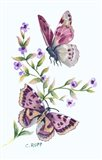Butterfly in Lilac