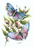 Butterfly in Pink and Blue