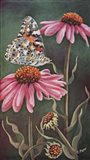 Coneflower with Butterfly