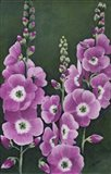 Hollyhocks in Lilac