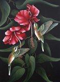 Hummingbird  Duet