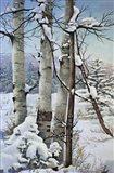 Winter Snow with Aspen