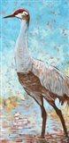 Sandhill Cranes IV