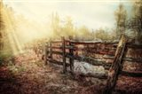 Wood Fences In The Fog