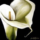 Arum Lily Ii