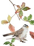 Bird And Maple Leaves
