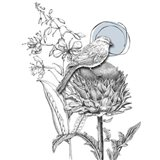 Graphite Bird And Thistle
