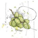 Fall Harvest - Grapes