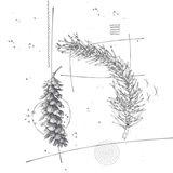 Long Pine Cone 2