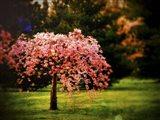 Plant A Hope