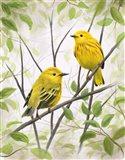 Springtime Warblers