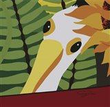 Peeping Pelican