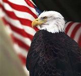 Bald Eagle And US Flag