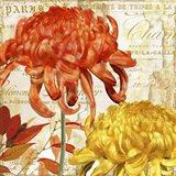 Chrysanthemes I