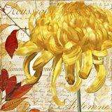 Chrysanthemes II