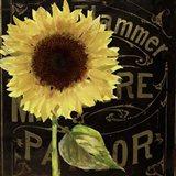 Sunflower Salon I
