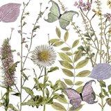 Botanique Refresh 2