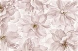 Translucent Cherry Blossom