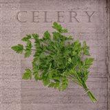 Classic Herbs Celery
