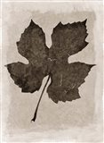 Sepia Grape Leaf