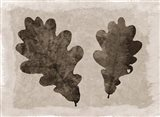 Sepia Oak Leaves