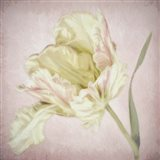 Pink Parrot Tulip Painting I