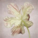 Pink Parrot Tulip Painting II