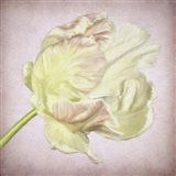 Pink Parrot Tulip Painting III