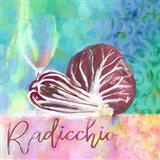 Radicchio - Italian Chicory