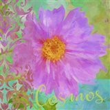 Colors Of Flowers I - Cosmos