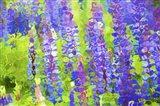 Fluid Flowers VIII