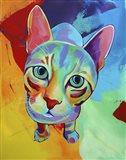 Ace Cat