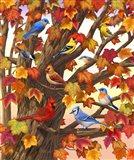 Maple Tree Marvel