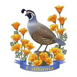 State Birds And Flowers CA 2