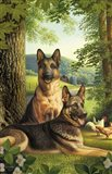 German Shepards/Chicken