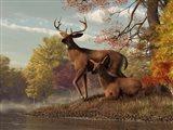 Deer On An Autumn Lakeshore