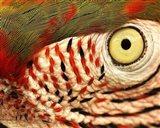 Polly Eye