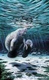 Mermaids Of Crystal River
