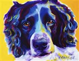 English Springer Spaniel Emma