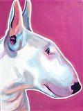 Bull Terrier - Bubble Gum