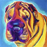 Sharpei - Big Man